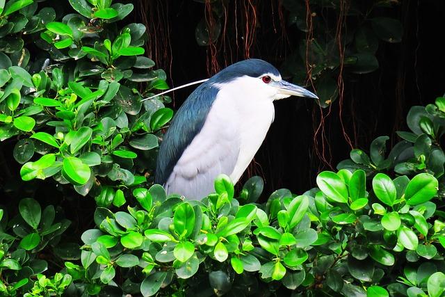 Nature, Bird, Outdoor, Park, Tropical, Wildlife