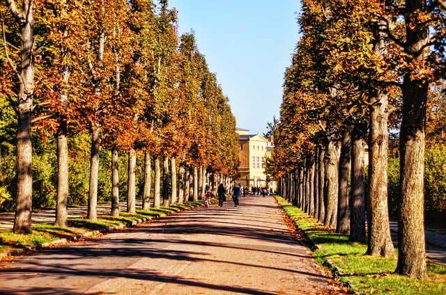 Tree Lined Avenue, Trees, Away, Park Sanssouci, Potsdam