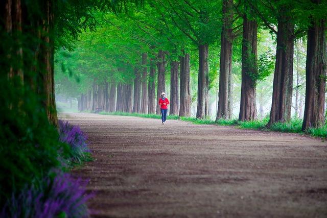 Wood, Nature, Road, Park, Scenery, Walk, Sidewalk