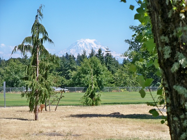 Scenery, Mountain, Scenic, Mount, Rainier, Park