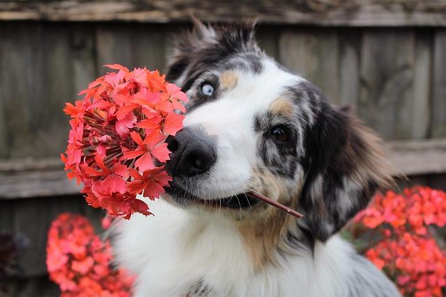 Flowers, Dog, Shepherd, Puppy, Spring, Park, Summer