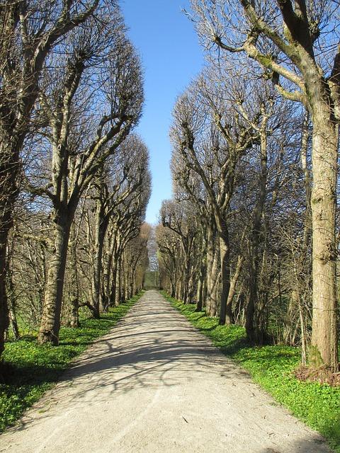 Avenue, Trees, Spring, Away, Park, Plant