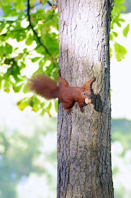 The Squirrel, Animal, Rodent, Park, Grass, Walnut, Kita