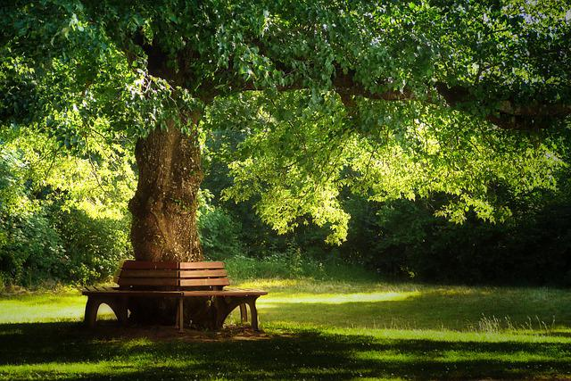 Tree, Nature, Park, Wood, Grass, Bank, Rest, Break