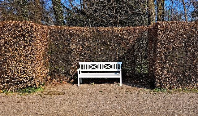 Park Bench, Wooden Bench, Painted White, Park