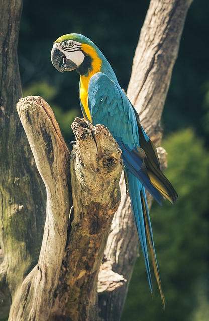 Ara, Parrot, Bird, Colorful, Ara Ararauna, Color, Blue