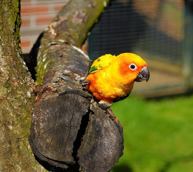 Bird, Parrot, Animal World, Bill, Nature, Tropical
