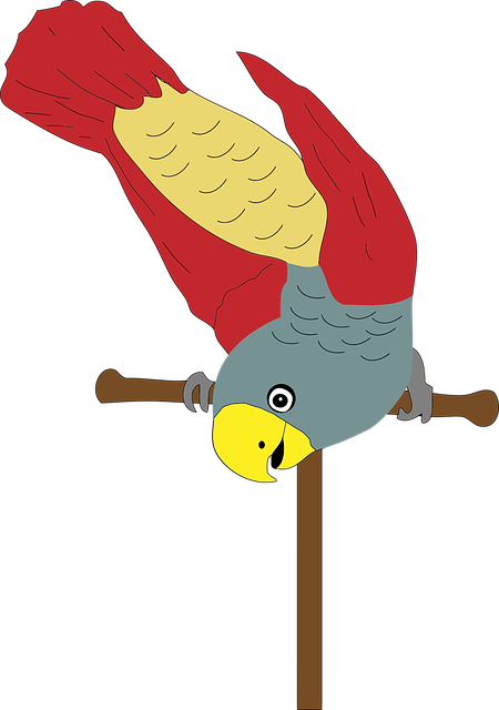 Animal, Bird, Colorful, Flying, Happy, Parrot, Perch