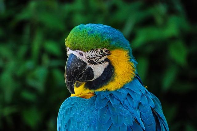 Parrot, Colorful, Plumage, Portrait, Blue, Zoo, Head
