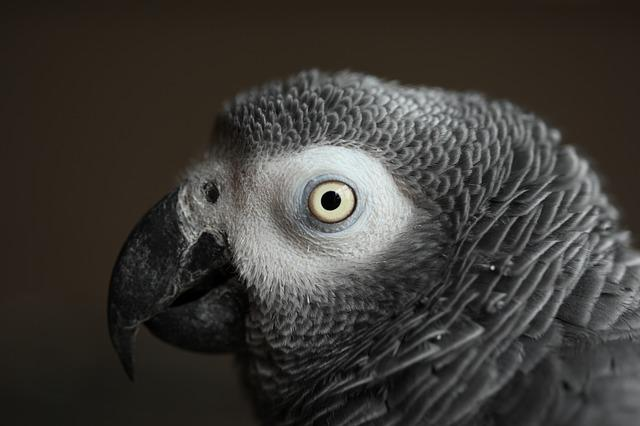 Bird, Wildlife, Nature, Parrot, African Grey, Feather