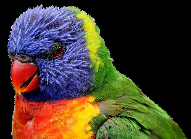 Parrot, Bird, Feather, Tropical, Animal, Close, Nature