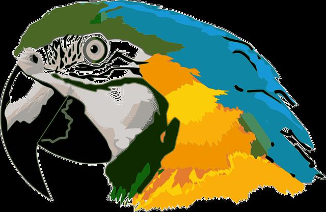 America Do Sul, Ave, Papel De Parede, Parrot