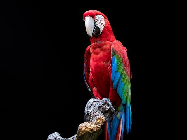 Bird, Parrot, Ara, Green Wing, Colorful, Plumage