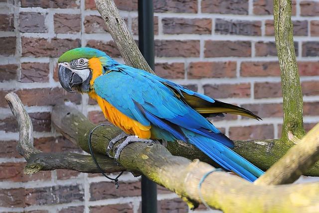 Parrot, Ara, Bird, Colorful, Plumage, Yellow Macaw