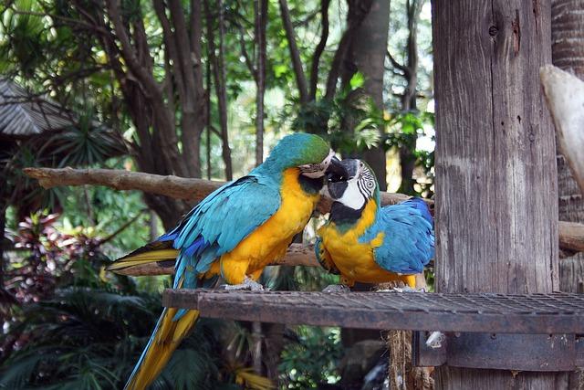 Попугай ара среда обитания