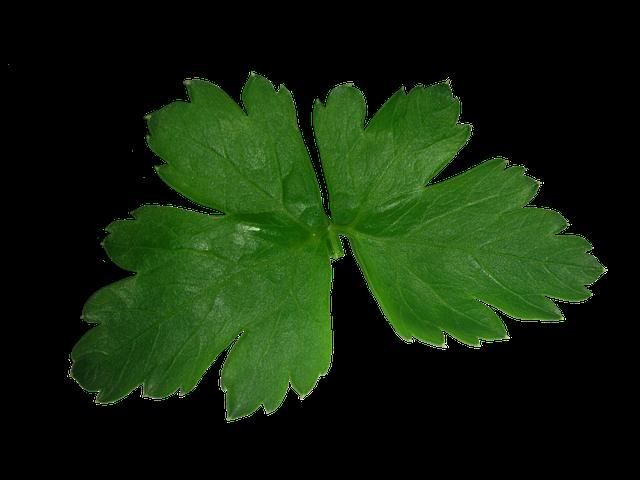 Parsley, Leaf, High, Texture, Green