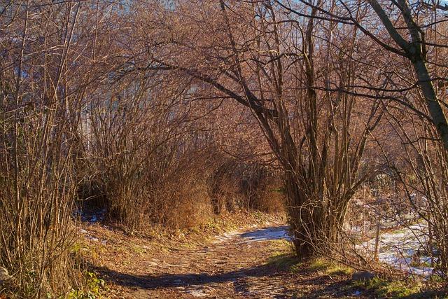 Promenade, Passage, Nature, Tree, Wood, Landscape