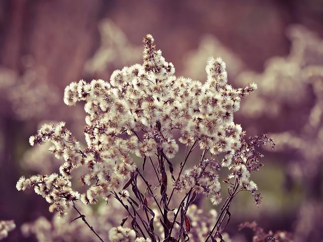 Broom, Nature, Plant, Pastellfarben, Mood, Landscape