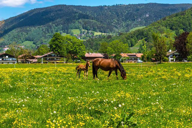 Horse, Brown, Foal, Bavarian Cold Blood, Pasture, Grass
