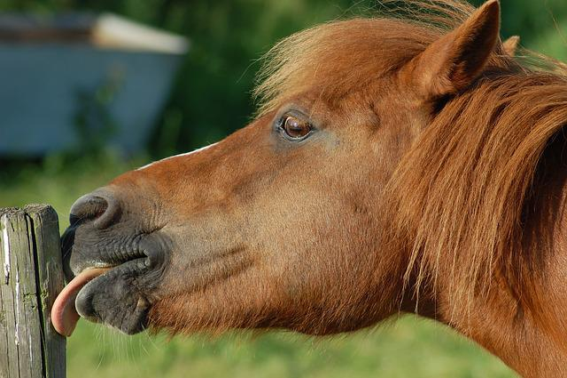 Horse, Pasture, Nature, Animal, Grass, Horses