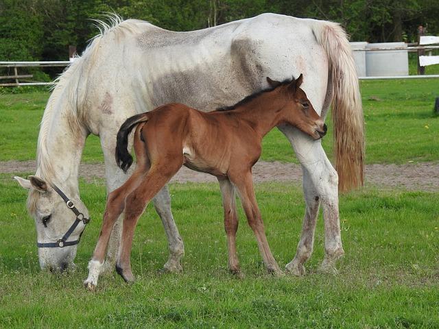 Farm, Pasture Land, Mammals, Lawn, The Horse, Mare