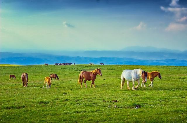 Horses, Pasture, Prairie, Mountain, Foal, Stallion, Sky