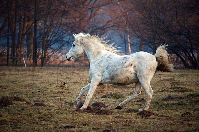 Horse, Mold, Gallop, Thoroughbred Arabian, Pasture