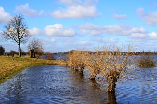 Flood, Fields, Pasture Trees, Water, High Water