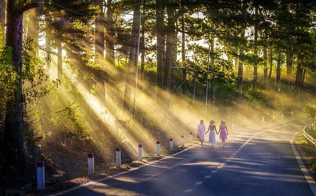 Path, Sunny, Yellow, Dawn, Beautiful Light