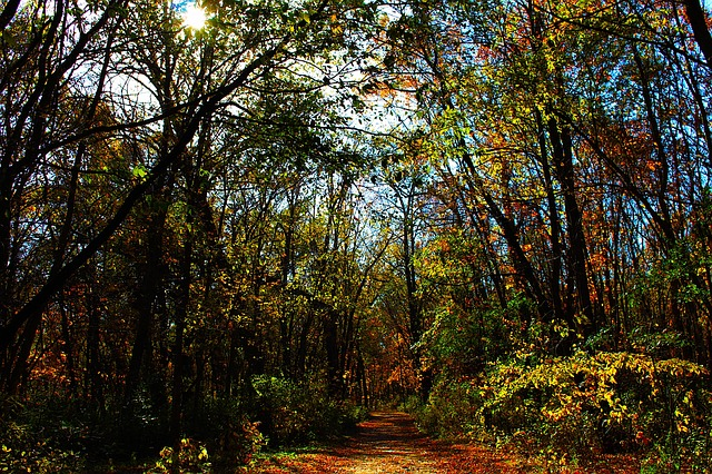 Nature, Forest, Trees, Outdoor, Path, Environment