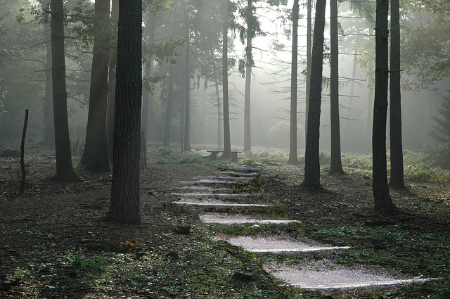 Forest, Path, Nature, Green, Outdoor, Tree, Wood