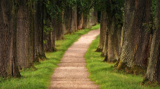 Tree, Avenue, Away, Nature, Path, Hiking, Forest