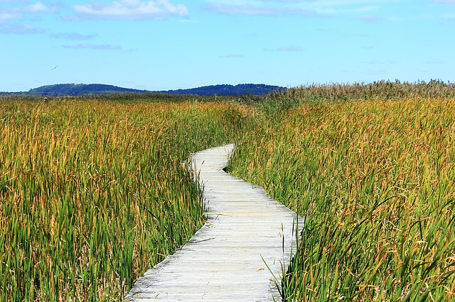 Reed, Path, Away, Thicket, Walk, Marsh Plant