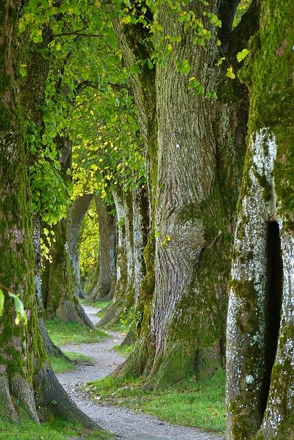 Trees, Path, Trail, Old, Avenue, Nature, Log, Forest
