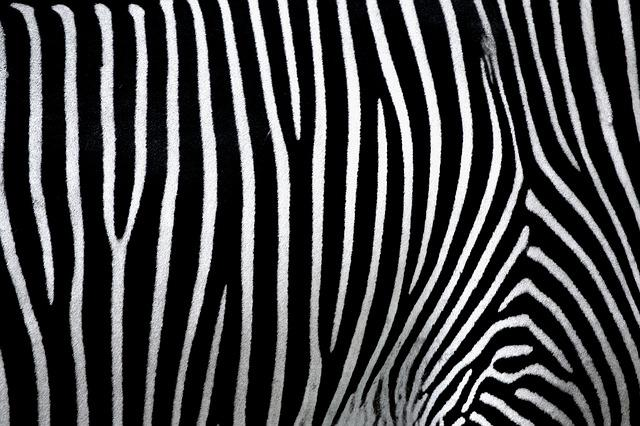 Background, Texture, Pattern, Zebra, Black And White
