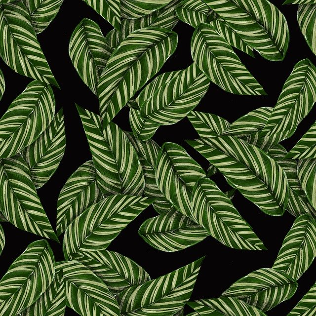 Leaves, Pattern, Tropical, Green, Black