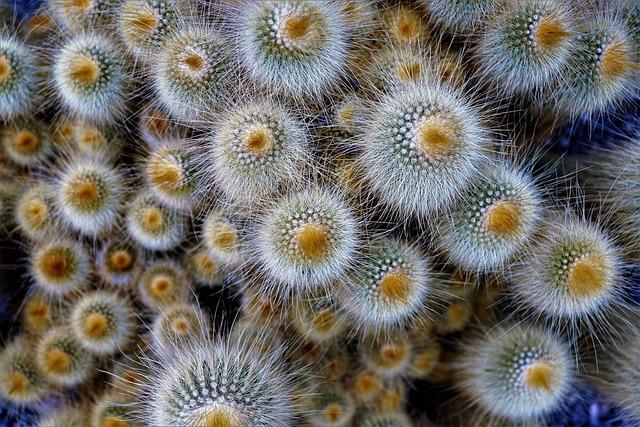 Nature, Background, Color, Plant, Close Up, Pattern