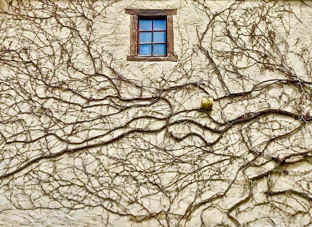 Vine, Window, Wall, Pattern, Decoration, Exterior
