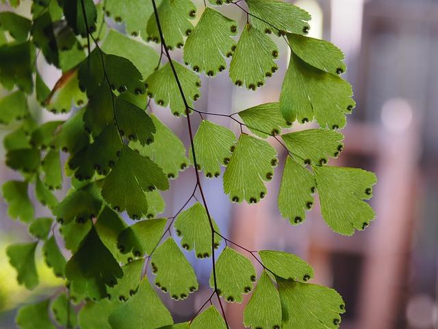 Maidenhair, Fern, Green, Spores, Leaves, Pattern