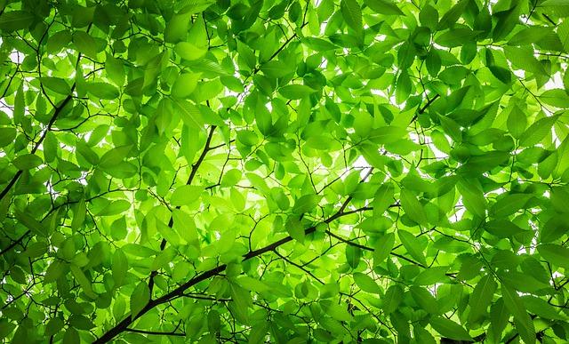 Wood, The Leaves, Twig, Leaf, Texture, Pattern, Nature