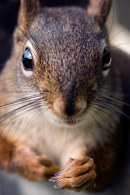 Squirrel, Macro, Nature, Animal, Eyes, Face, Look, Paw