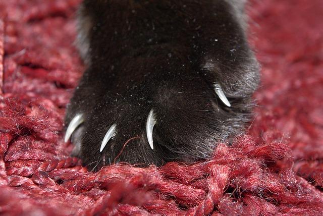 Cat, Paw, Cat's Paw, Pet, Paw Print, Mieze