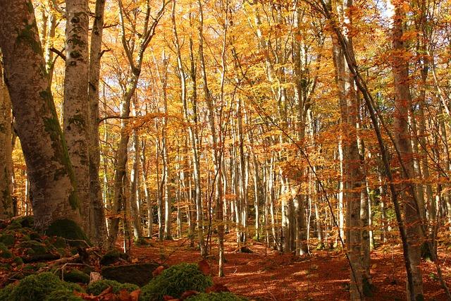 Fall, Orange, Wood, Peace Of Mind, Fairy, Celtic, Magic