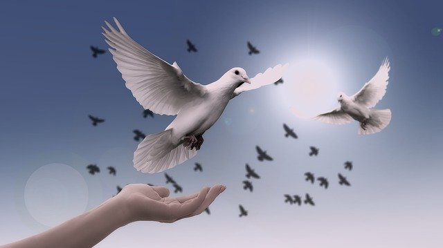 Dove, Hand, Trust, God, Pray, Prayer, Peace, Soul