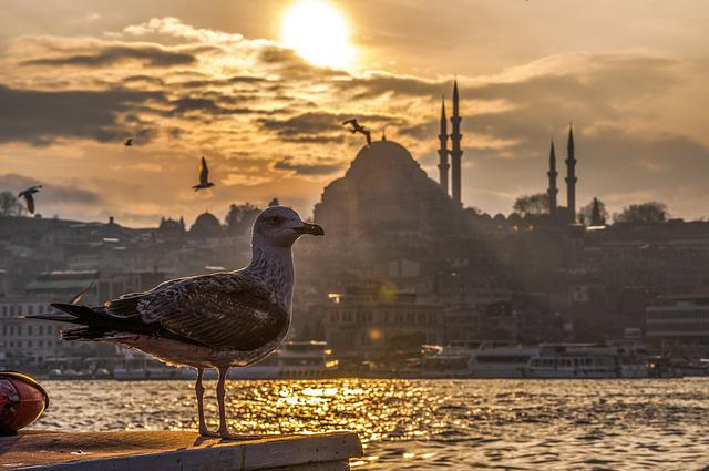 Seagull, Marine, Cami, Turkey, Peace, Beach, Sunset