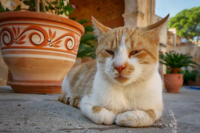 Cat, Crete, Monastery, Lazy, Lying, Mieze, Peaceful