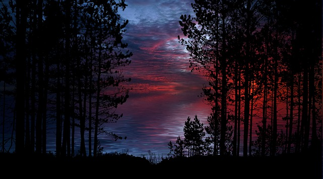 Nature, Trees, Peaceful, Landscape, Lake, Watch