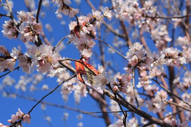 Peach Blossom, Peach Embankment, Tianjin