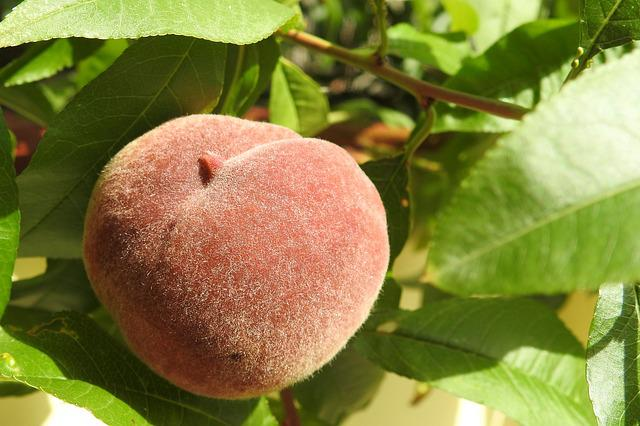 Peach, Peach Tree, Fruit, Eat