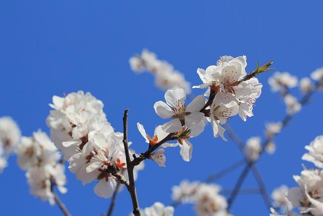 Tianjin Hongqiao, Peach Blossom, Peach Embankment